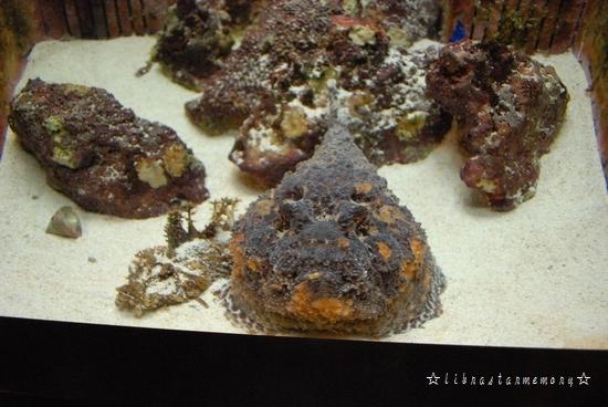 岩魚.jpg