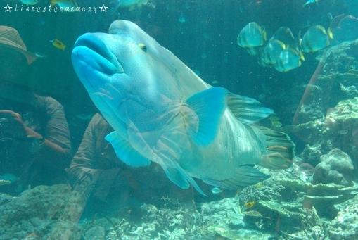 青い魚.jpg